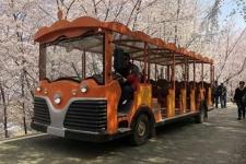 23座燃油观光车(叮当款)